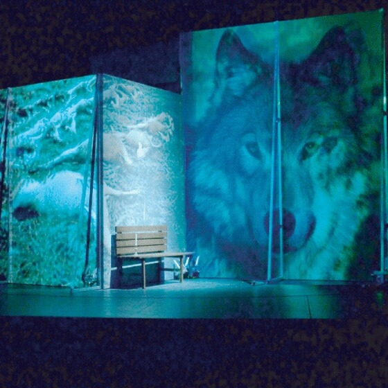 Wolf stage_backdrop_printed (002)